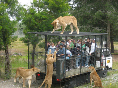 Orana Wildlife Park, Christchurch