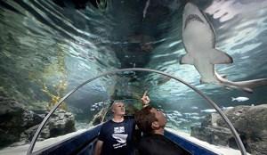 Kelly Tarlton Aquarium, Auckland